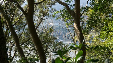 木々の隙間から見える長井崎