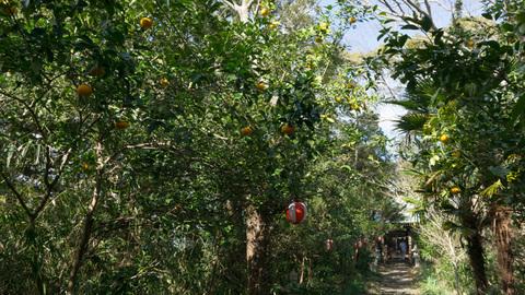 淡島神社の参道